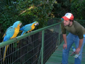 Blue macaws!